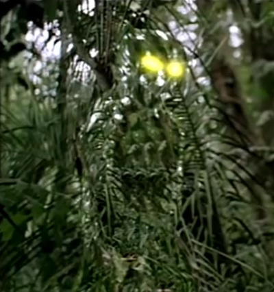 Image result for pictures from the movie predator